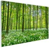 FotoCadeau.nl - Groene bomen in het bos Glas 180x120 cm - Foto print op Glas (Plexiglas wanddecoratie)