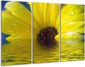 Glasschilderij Bloem | Geel, Bruin, Grijs | 120x80cm 3Luik | Foto print op Glas |  F000409