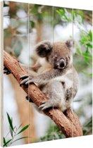 Koala op boom Hout 60x80 cm - Foto print op Hout (Wanddecoratie)