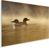 Twee ijsduikers in de mist Plexiglas 180x120 cm - Foto print op Glas (Plexiglas wanddecoratie) XXL / Groot formaat!