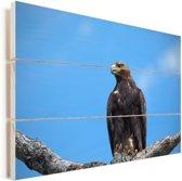 Steenarend hoog in een boom Vurenhout met planken 90x60 cm - Foto print op Hout (Wanddecoratie)