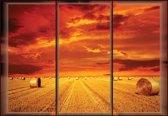 Fotobehang Field Gold Pasture    L - 152.5cm x 104cm   130g/m2 Vlies