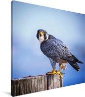 Valk op een houten paal Canvas 20x20 cm - klein - Foto print op Canvas schilderij (Wanddecoratie woonkamer / slaapkamer)