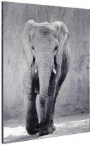 Olifant zwart-wit gecentreerd Aluminium 20x30 cm - klein - Foto print op Aluminium (metaal wanddecoratie)