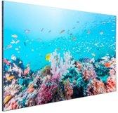 Kleurrijk rif en koraal Aluminium 60x40 cm - Foto print op Aluminium (metaal wanddecoratie)