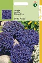 Hortitops Zaden - Lobelia erinus comp. Crystal Palace