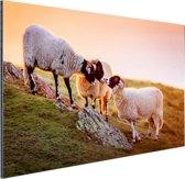 Drie schapen bij zonsopkomst Aluminium 120x80 cm - Foto print op Aluminium (metaal wanddecoratie)