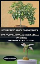 Stop Buying Avocados Grow Your Own: How to Grow an Avocados Tree in a Small Pot at Home
