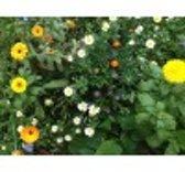 Veldbloemen Mini Wildbloemen meerjarig 1 kilo