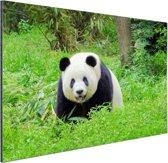 Grote panda in het gras Aluminium 180x120 cm - Foto print op Aluminium (metaal wanddecoratie) XXL / Groot formaat!
