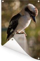 Een kookaburra die zit op een railing Tuinposter 80x120 cm - Tuindoek / Buitencanvas / Schilderijen voor buiten (tuin decoratie)