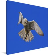 Vliegende sakervalk Canvas 20x20 cm - klein - Foto print op Canvas schilderij (Wanddecoratie woonkamer / slaapkamer)