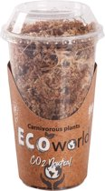 Swampworld Mos - De Beste Vleesetende Planten Bodem