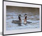 Foto in lijst - Een koppel roodhalsfuten in het water fotolijst zwart met witte passe-partout 60x40 cm - Poster in lijst (Wanddecoratie woonkamer / slaapkamer)