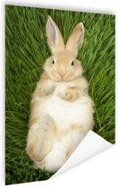Konijn liggend in gras Poster 80x120 cm - Foto print op Poster (wanddecoratie woonkamer / slaapkamer) / Dieren Poster
