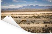 Panorama met uitzicht op het mistige landschap van Arequipa Tuinposter 180x120 cm - Tuindoek / Buitencanvas / Schilderijen voor buiten (tuin decoratie) XXL / Groot formaat!