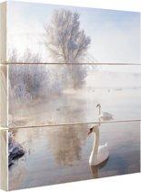Zwanen in de winter Hout 50x50 cm - Foto print op Hout (Wanddecoratie)