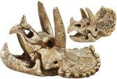SF skull triceratops S