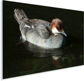Nonnetje in de schaduw Plexiglas 80x60 cm - Foto print op Glas (Plexiglas wanddecoratie)