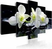 Schilderij - Melancholische Orchidee
