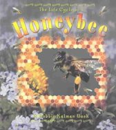 The Life Cycle of the Honeybee