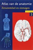 Sesam Atlas van de anatomie / 3 Zenuwstelsel en zintuigen