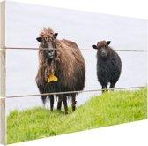 Schaap met lam in Denemarken Hout 30x20 cm - Foto print op Hout (Wanddecoratie)