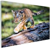 Jong tijgertje loopt op boomstam Glas 60x40 cm - Foto print op Glas (Plexiglas wanddecoratie)