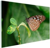 Vlinder op groen blad Glas 180x120 cm - Foto print op Glas (Plexiglas wanddecoratie) XXL / Groot formaat!