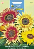 Buzzy Seeds - Zonnebloem Mix (Helianthus cucumerifolius)