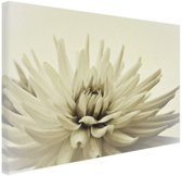 FotoCadeau.nl - Witte dahlia bloem sepia  Canvas 60x40 cm - Foto print op Canvas schilderij (Wanddecoratie)