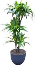 Kunstplant Dracaena met sierpot Eggy35 antraciet