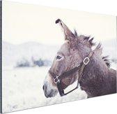 Ezel in de sneeuw Aluminium 120x80 cm - Foto print op Aluminium (metaal wanddecoratie)