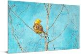 Geelgors met een blauwe lucht op de achtergrond Aluminium 30x20 cm - klein - Foto print op Aluminium (metaal wanddecoratie)