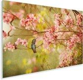 Kolibrie op een tak van een boom met de lente roze bloesems Plexiglas 180x120 cm - Foto print op Glas (Plexiglas wanddecoratie) XXL / Groot formaat!