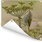Een tjiftjaf op zoek naar insecten Tuinposter 100x100 cm - Tuindoek / Buitencanvas / Schilderijen voor buiten (tuin decoratie)