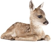 KEK Amsterdam Forest Friends: Deer - Muursticker - Multicolor