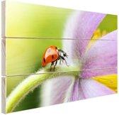 Lieveheersbeestje op een bloem Hout 60x40 cm - Foto print op Hout (Wanddecoratie)