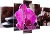 Glasschilderij Orchidee   Paars, Zwart, Bruin   170x100cm 5Luik   Foto print op Glas    F004056