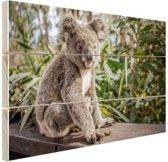 Zittende koala in Australie Hout 80x60 cm - Foto print op Hout (Wanddecoratie)