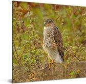 Sperwer zit op een hek tussen het struikgewas Aluminium 80x60 cm - Foto print op Aluminium (metaal wanddecoratie)
