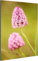 Twee orchideeën Aluminium 80x120 cm - Foto print op Aluminium (metaal wanddecoratie)