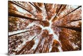 Onderaanzicht van de herfstbladeren in de Redwood forest in China Aluminium 120x80 cm - Foto print op Aluminium (metaal wanddecoratie)