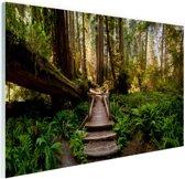 Trap van gevallen bomen in jungle Glas 30x20 cm - klein - Foto print op Glas (Plexiglas wanddecoratie)