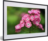 Foto in lijst - Roze vlambloemen met groene achtergrond fotolijst zwart met witte passe-partout 60x40 cm - Poster in lijst (Wanddecoratie woonkamer / slaapkamer)