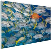 Vis zwemt in tegengestelde richting Glas 30x20 cm - Foto print op Glas (Plexiglas wanddecoratie)