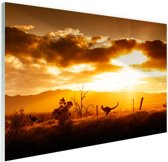 Kangoeroe bij zonsondergang Glas 90x60 cm - Foto print op Glas (Plexiglas wanddecoratie)