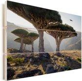 Drakenbloedboom in rotsachtig landschap in Jemen Vurenhout met planken 120x80 cm - Foto print op Hout (Wanddecoratie)