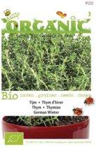 Buzzy® Organic - Tijm (BIO)
