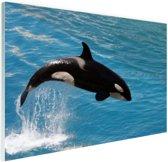 Springende kleine orka Glas 60x40 cm - Foto print op Glas (Plexiglas wanddecoratie)